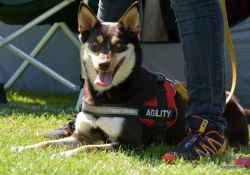 Agility team competition
